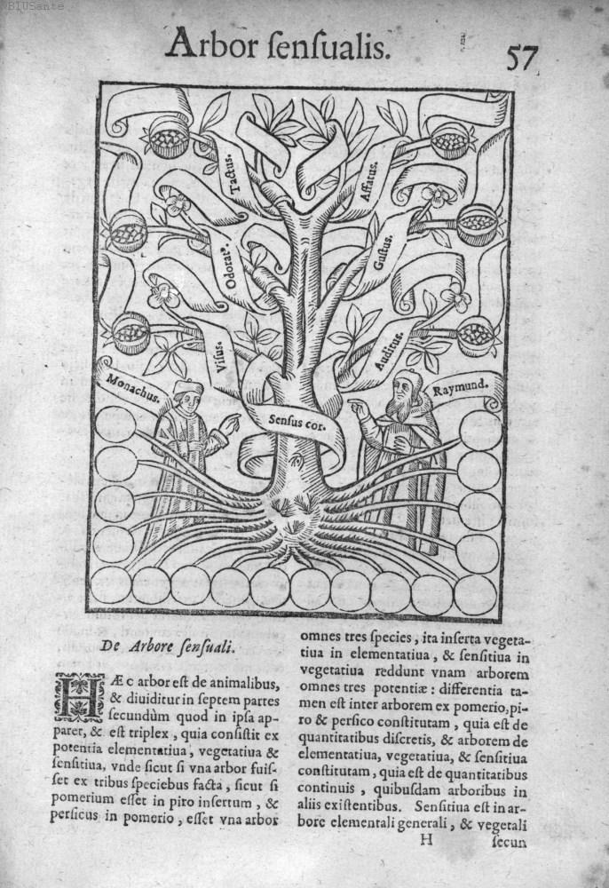 Arbor Sensualis (ibid) [via]