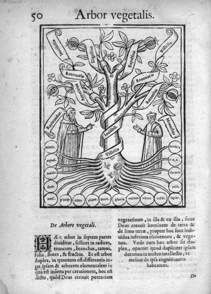Arbor Vegetalis, originally thirteenth century, from sixteenth century. [via]